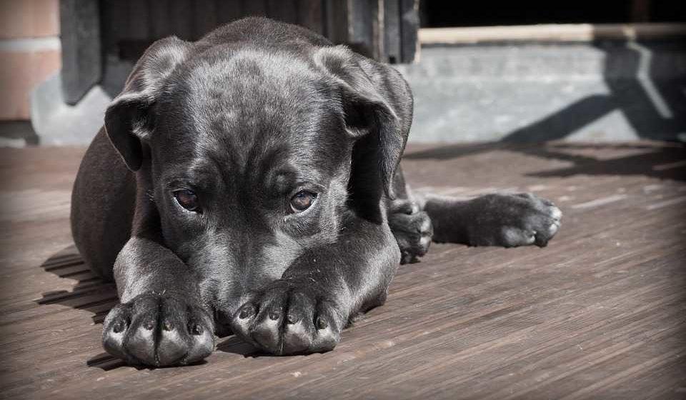 Få hunde godbidder, der hjælper din hund